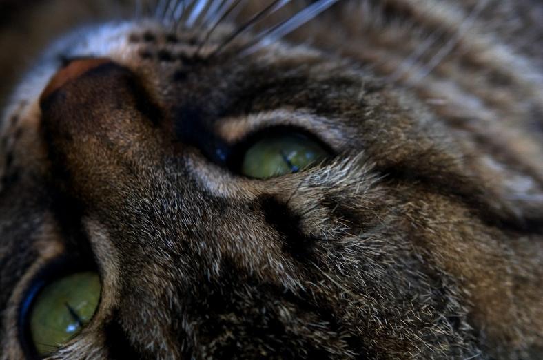 kitty_friend