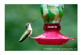 HummingbirdRests